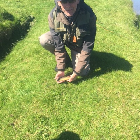 River Ure Hawed